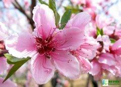 <b>春天怎么预防皮肤过敏</b>