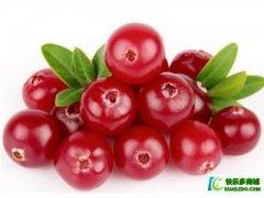 <b>蔓越莓的作用有哪些? 预防女性泌尿感染</b>