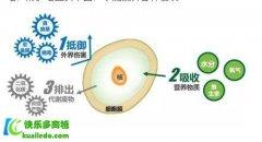 <b>吃卵磷脂有什么好处 揭密卵磷脂对大脑和肝脏的作用</b>