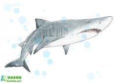 如何区分鱼油和鱼肝油?两者保健功能完全不同