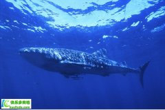 <b>什么是鱼油及主要生理功能</b>